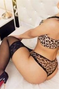 Vipul, escort in Germany - 7021